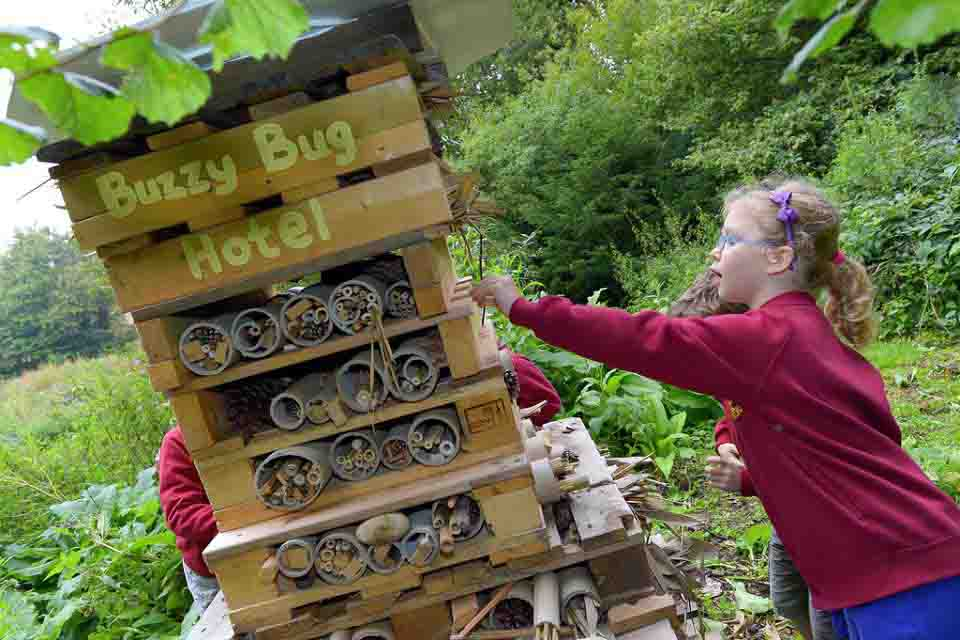 Make A Bug Hotel on Bug Insect Activities
