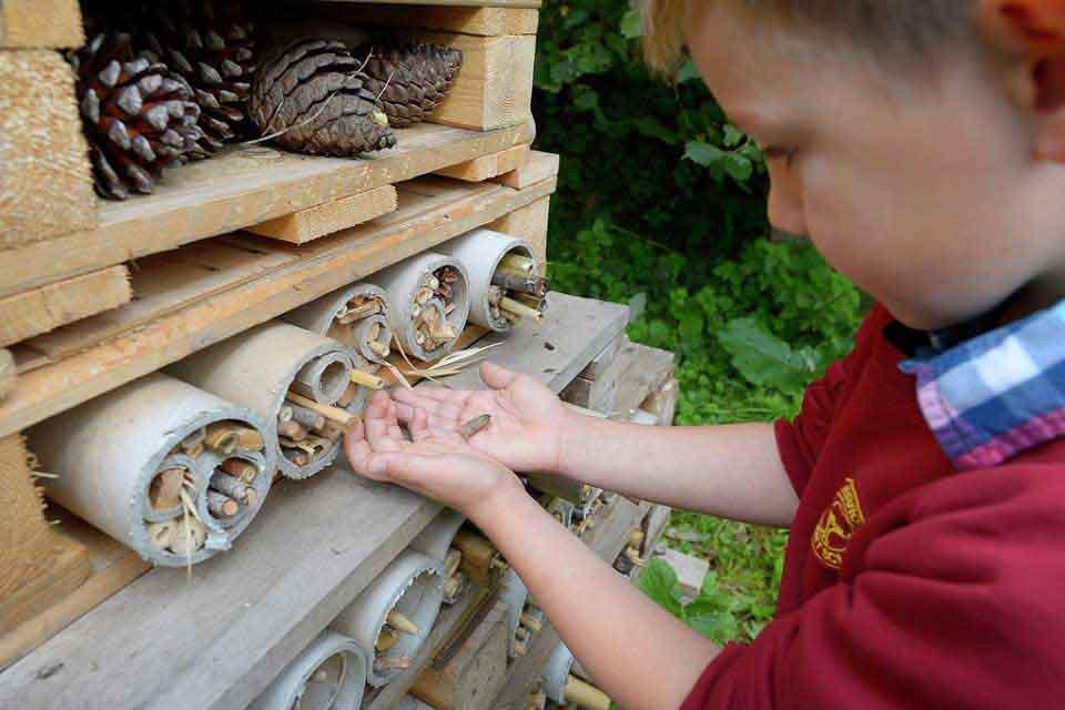 Make A Bug Hotel Rhs Campaign For School Gardening