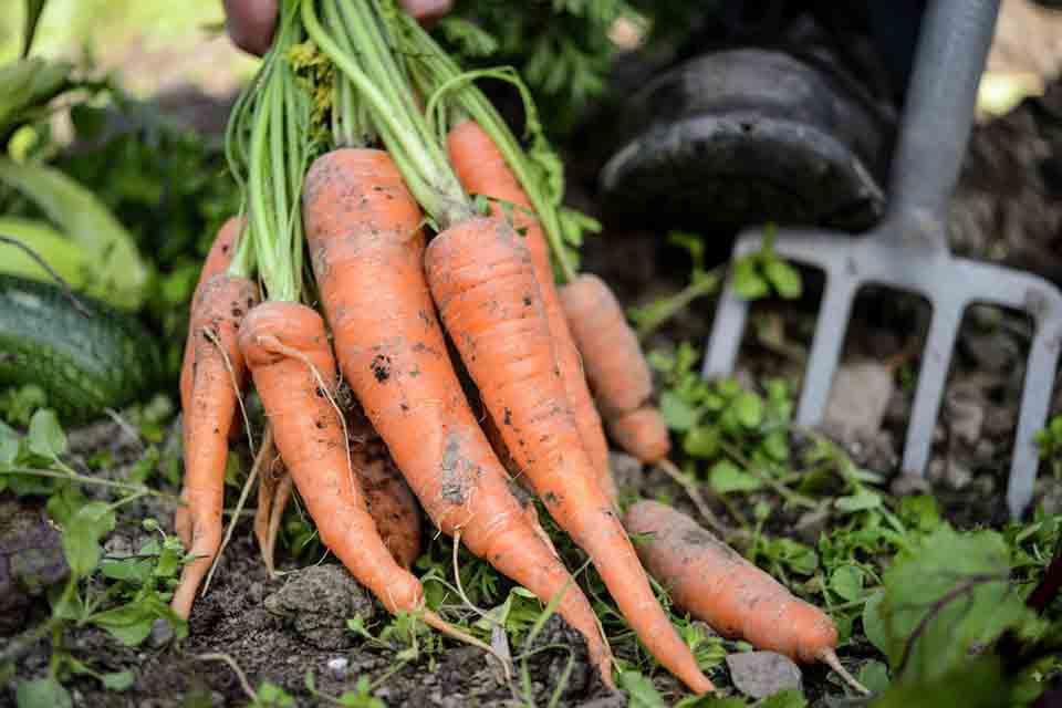 Vegetable crop planner / RHS Campaign for School Gardening
