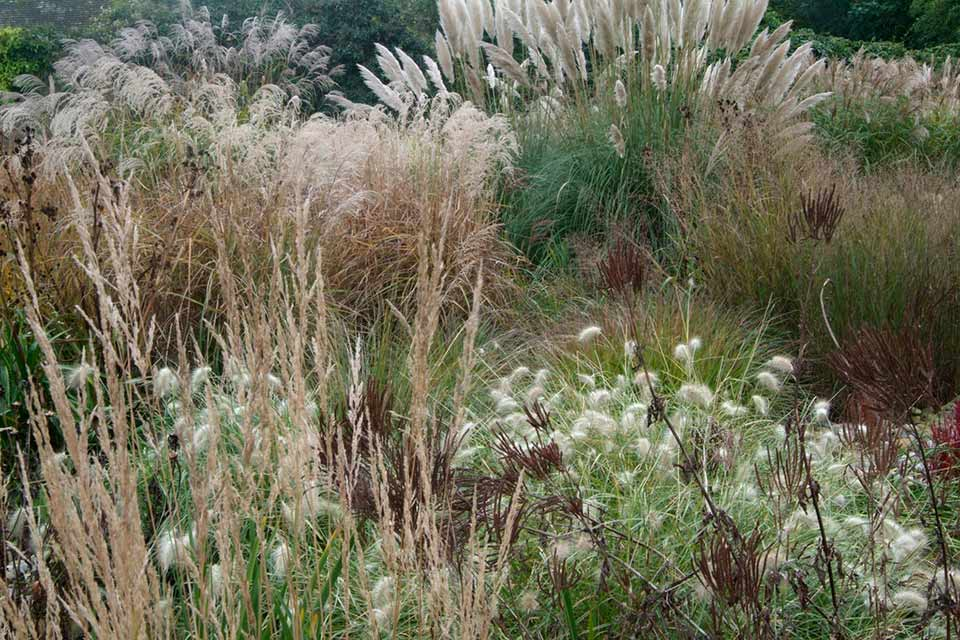 Autumn fruits and flowers rhs campaign for school gardening ornamental grasses workwithnaturefo