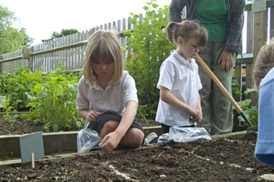Direct Seed Sowing Rhs Campaign For School Gardening